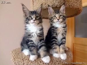 кошки породи фото